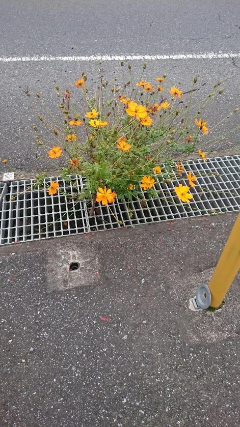 花を見て根を褒める☆職人さんの力