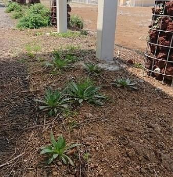 メンテナンスフリーのお庭~人工芝~